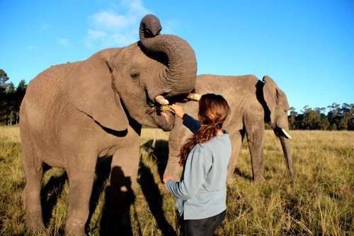 What is a gap year? Woman feeding elephant