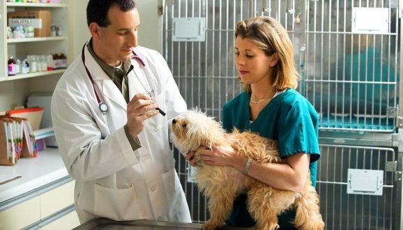 Veterinary Apprenticeships