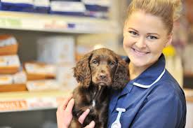 Veterinary Apprenticeships
