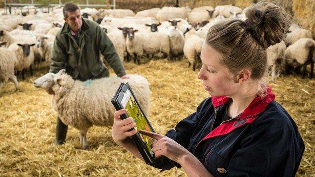 farming apprenticeships