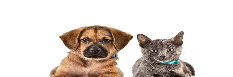 Royal Veterinary College apprenticeships