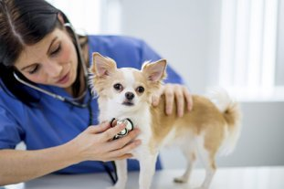 Bishop burton college apprenticeships animal care