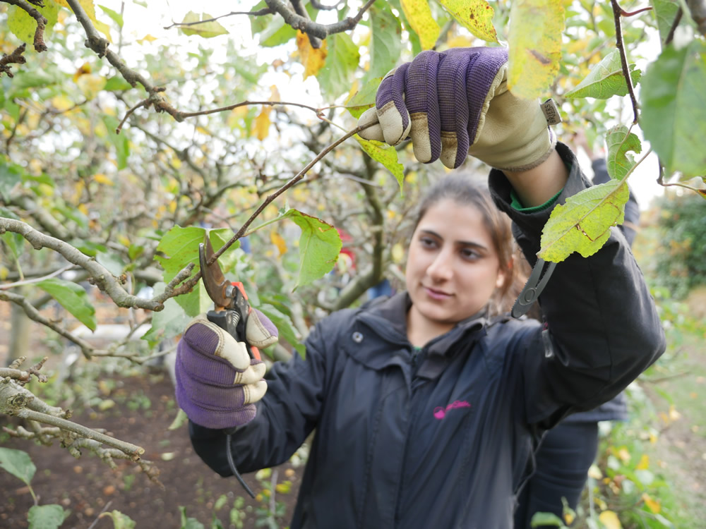 berkshire college of agriculture apprenticeships horticulture