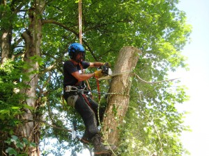 capel manor college apprenticeships trees and timber