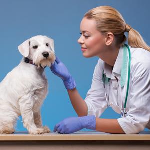 cornwall college apprenticeships animal care