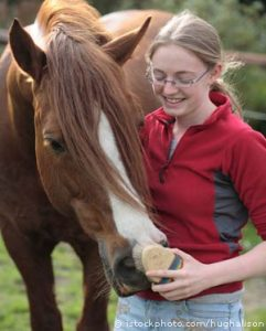 cornwall college apprenticeships horse care