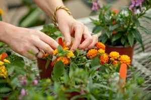 cornwall college apprenticeships horticulture