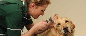dart training apprenticeships veterinary nursing