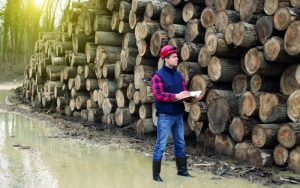 dart training apprenticeships trees and timber