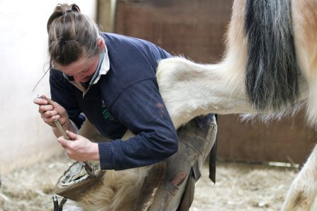 herefordshire and ludlow college apprenticeships farrier