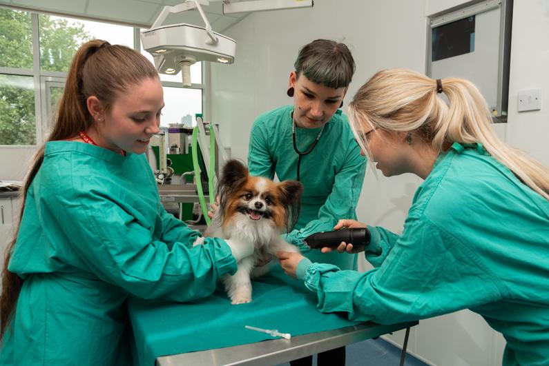 east durham college apprenticeships vet nurse