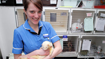 haddon training apprenticeships animal care and welfare