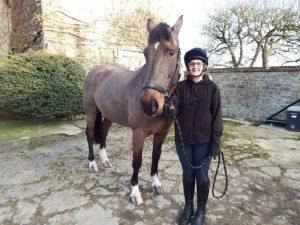 haddon training apprenticeships equine