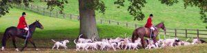 hound welfare