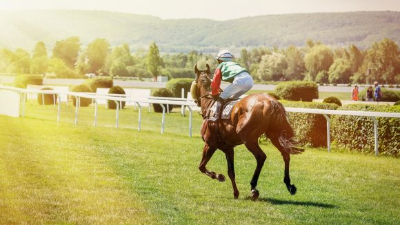 Racing horse coming first to finish line. Racehorse with jockeys during a horse race. Jockeys runs into the turn of the racetrack